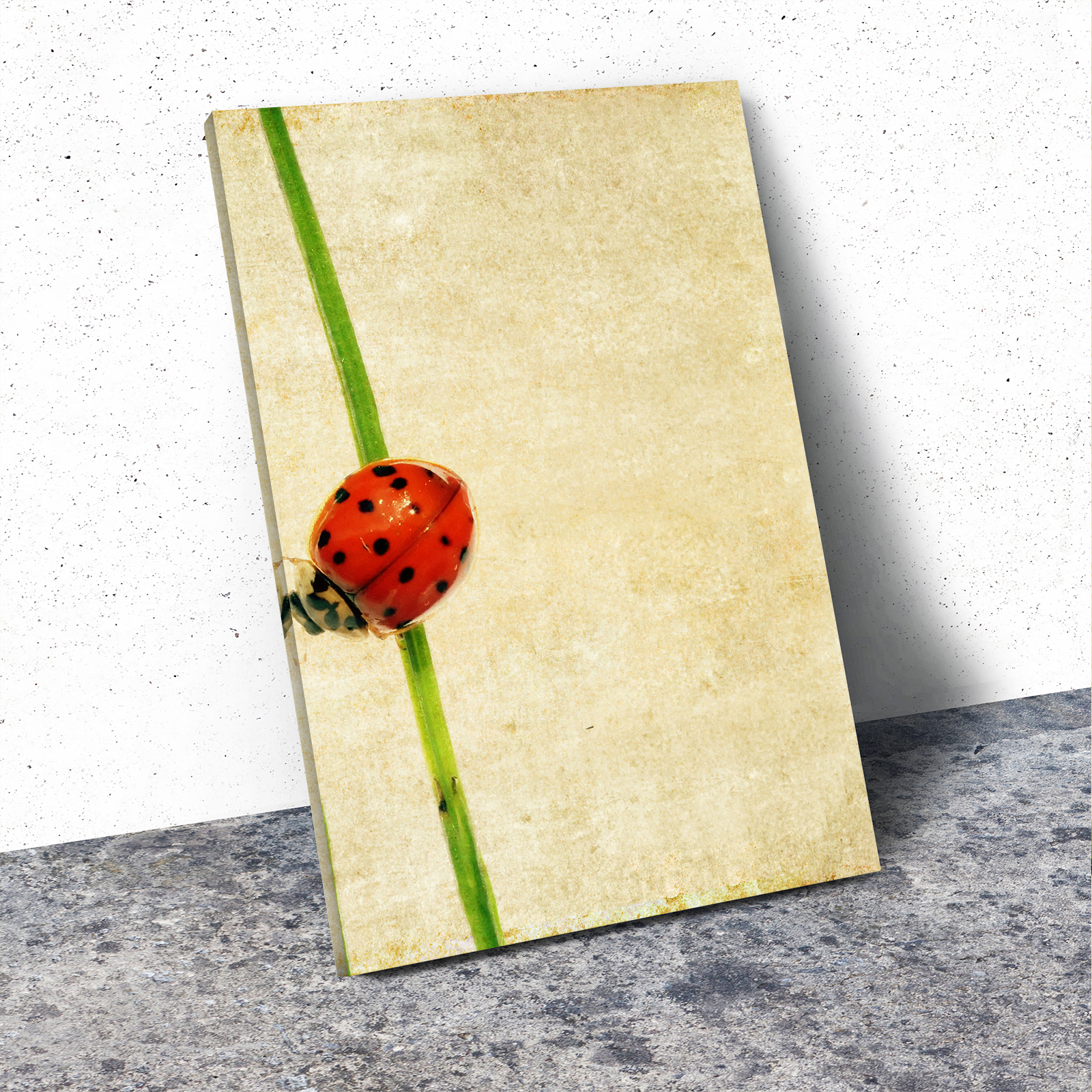 A322 Ladybird Black White Animal Portrait Canvas Picture Print Small Wall Art